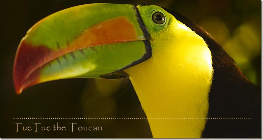 toucan_web